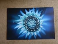 Blüte 75x50