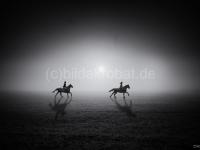 Pferde 75x50