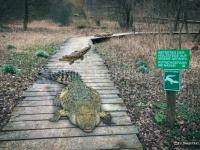 Composing mit Krokodilen