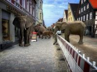 Composing Elefanten Lemgo